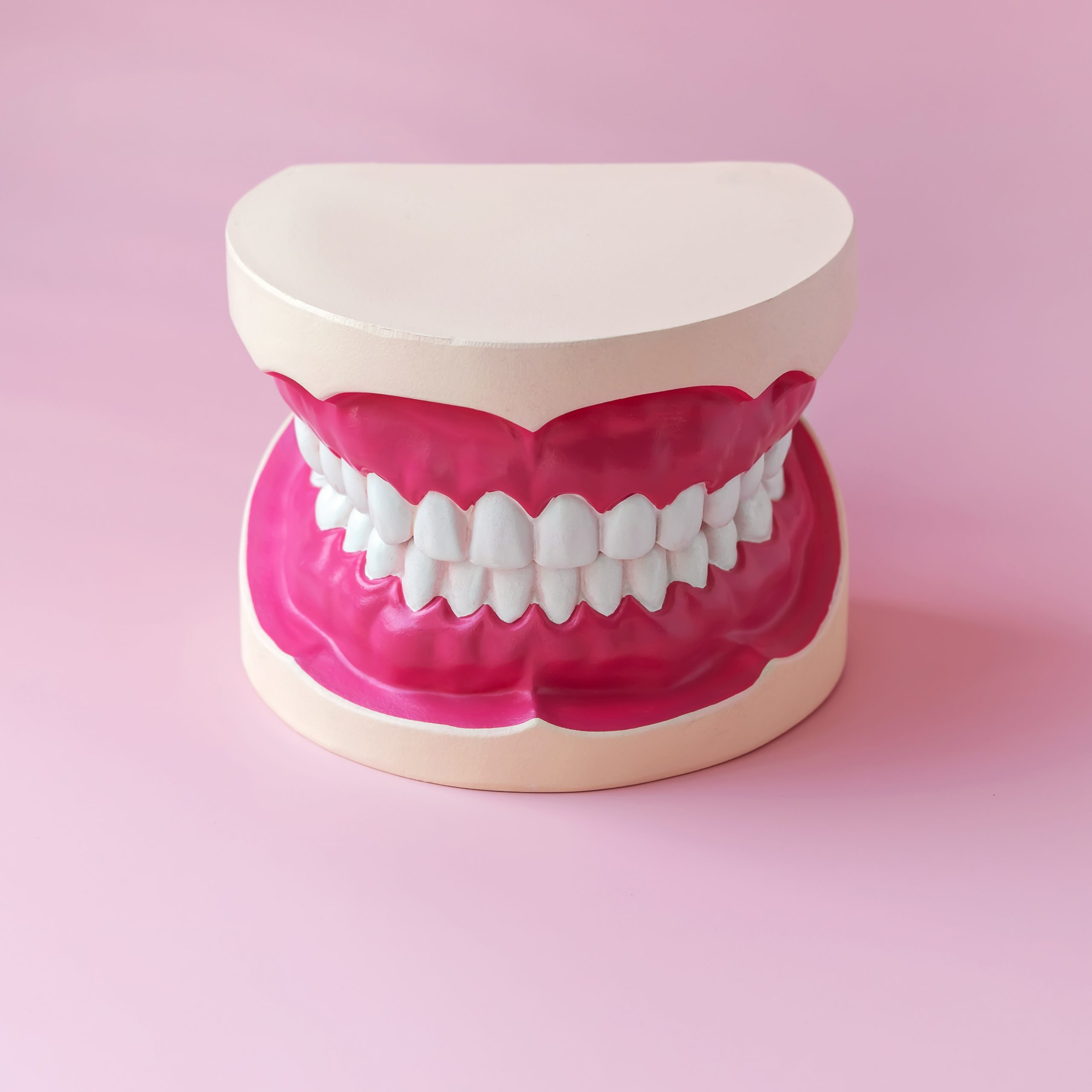 Human jaw mockup with gums and teeth. Study guide for children and students.